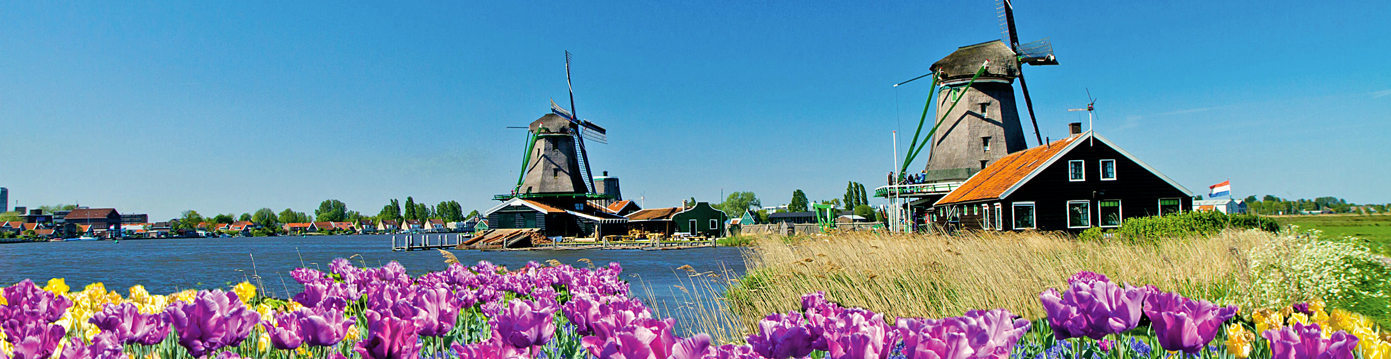 Photograph of Tulips & Windmills